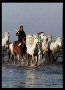 [015] Pferde-Karte 164, Camarguepferde -Herde Und Hirte, ~1980 - Pferde
