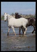 [015] Pferde-Karte 166, Pferde In Der Camargue, Frankreich, ~1980 - Pferde