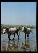 [015] Pferde-Karte 168, Wildpferde, Camargue, Frankreich, ~1980 - Pferde