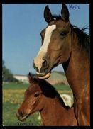 [015] Pferde-Karte 169, Stute Mit Fohlen, ~1980 - Pferde
