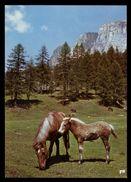 [015] Pferde-Karte 170, Stute Mit Fohlen, ~1980 - Pferde