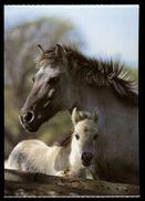 [015] Pferde-Karte 173, Stute Mit Fohlen, Tarpan-Wildpferd, ~1980 - Pferde