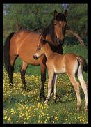 [015] Pferde-Karte 174, Stute Mit Fohlen, ~1980 - Pferde