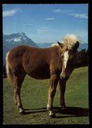 [015] Pferde-Karte 177, Fohlen, 1970 - Pferde