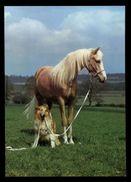 [015] Pferde-Karte 178, Pferd Mit Hund, ~1980 - Pferde