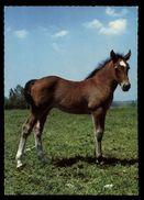 [015] Pferde-Karte 180, Fohlen, ~1970 - Pferde