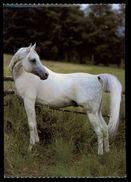 [015] Pferde-Karte 182, Asil-Araber, ~1980 - Pferde
