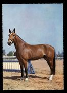 [015] Pferde-Karte 183, Pferd, ~1970 - Pferde