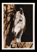[015] Pferde-Karte 187, Schimmel, ~1980 - Pferde