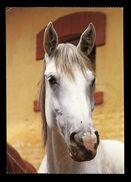 [015] Pferde-Karte 188, Schimmel, ~1990 - Pferde