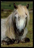 [015] Pferde-Karte 189, Dartmoor-Pony, ~1980 - Pferde