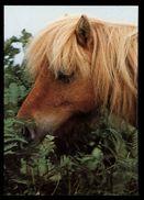 [015] Pferde-Karte 190, Dartmoor-Pony, ~1980 - Pferde