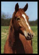 [015] Pferde-Karte 193, Fuchs, ~1980 - Pferde