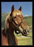 [015] Pferde-Karte 194, Ohne Angabe, ~1970 - Pferde