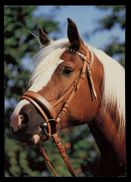 [015] Pferde-Karte 196, Ohne Angabe, ~1980 - Pferde