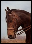 [015] Pferde-Karte 197, Ohne Angabe, Gel. 1984 - Pferde