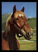 [015] Pferde-Karte 201, Ohne Angabe, Gel. 1972 - Pferde