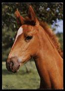 [015] Pferde-Karte 202, Fohlen, ~1980 - Pferde