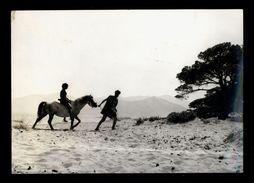 [015] Pferde-Karte 205, Pferd Mit Paar, Filmstil Aus Dem Film Junge Aphroditen 1963, Photo - Pferde