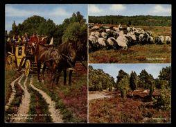 [015] Pferde-Karte 206, Postkutsche In Lüneburger Heide, Gel. 1971 - Pferde