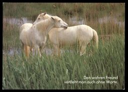 [015] Pferde-Karte 210, Pferde, Houtland, ~1990 - Pferde