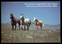[015] Pferde-Karte 211, Pferde, Houtland, ~1990 - Pferde