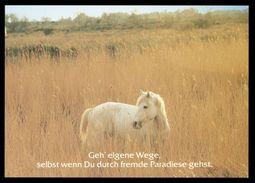 [015] Pferde-Karte 213, Pferde, Houtland, ~1990 - Pferde
