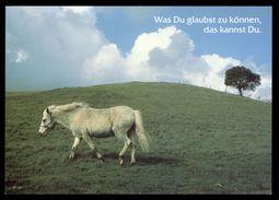 [015] Pferde-Karte 214, Pferde, Houtland, ~1990 - Pferde