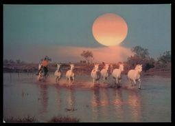 [015] Pferde-Karte 217, Pferde Der Carmague, ~1980 - Pferde