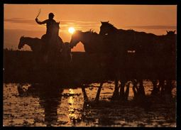 [015] Pferde-Karte 218, Pferde Der Carmague, ~1980 - Pferde