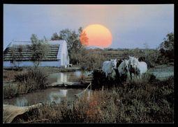 [015] Pferde-Karte 220, Pferde Der Carmague, ~1980 - Pferde