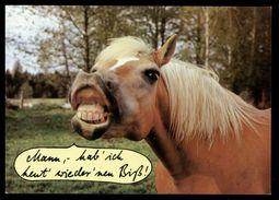 [015] Pferde-Karte 221, Pferde-Scherzkarte, ~1990 - Pferde