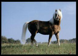 [015] Pferde-Karte 223, Ohne Angabe, ~1980 - Pferde