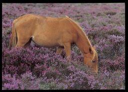 [015] Pferde-Karte 225, Ohne Angabe, ~1980 - Pferde