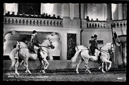 [015] Pferde-Karte 235, Spanische Hofreitschule Wien, Schulquadrille, Gel. 1963 - Pferde