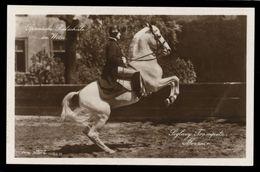 [015] Pferde-Karte 236, Spanische Hofreitschule Wien, Siglavy Trompeta Mezzair, ~1930 - Pferde