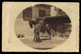 [015] Pferde-Karte 240, Pferd Mit Paar, Private Aufnahme ~1910, Mängel - Pferde