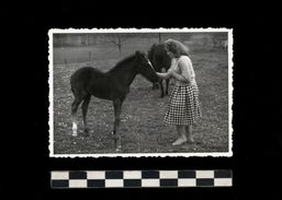 [015] Pferde-Photo 245, Pferd + Fohlen Mit Frau, Privates Photo, ~1950 - Pferde