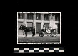 [015] Pferde-Photo 246, Kutsche  Fiaker In Wien, Privates Photo, Pfingstsonntag 1953 - Pferde