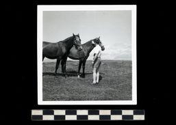 [015] Pferde-Photo 249, 2 Pferde Mit Mann, Datiert 1963, Privates Photo - Pferde