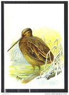 BUZIN - CARTE BLANCO - BECASSINE DES MARAIS - 1985-.. Uccelli (Buzin)