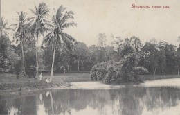 Singapour - Singapore - Tyersall Lake - Singapour