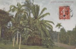 Singapour - Singapore - Botanical Gardens - Singapour