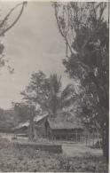 Indonésie - Indonesia -  Sumatra - Carte-Photo - Lahewa Nias Sumatra - Village - 1933 - Indonésie