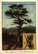 4 Cards  PUB Trees Arbres Cacao Van Houten Marronnier Chest -Nut Tree Sapin Fir-tree  Pin Pine Chêne Oak - Van Houten