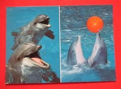 H4-Postcard-Knies Kinder Zoo Rapperswil / Schweiz,Dolphins,Switzerland - Delfini