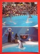 H4-Postcard-Knies Kinder Zoo Rapperswil / Schweiz,Dolphins,Switzerland - Delphine