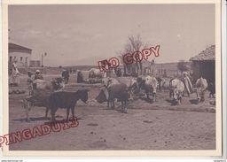 Au Plus Rapide Algérie 1929 Constantine Ain Yagout Bêtes à L'abreuvoir Beau Format 13 Par 18 Cm Très Bon état - Afrique