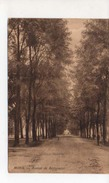 Mons  Avenue De Bertaimont - Mons