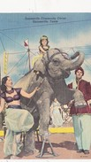 CPA TEXAS Gainesville Elephant Cirque Circus Cirk Animal - Elephants